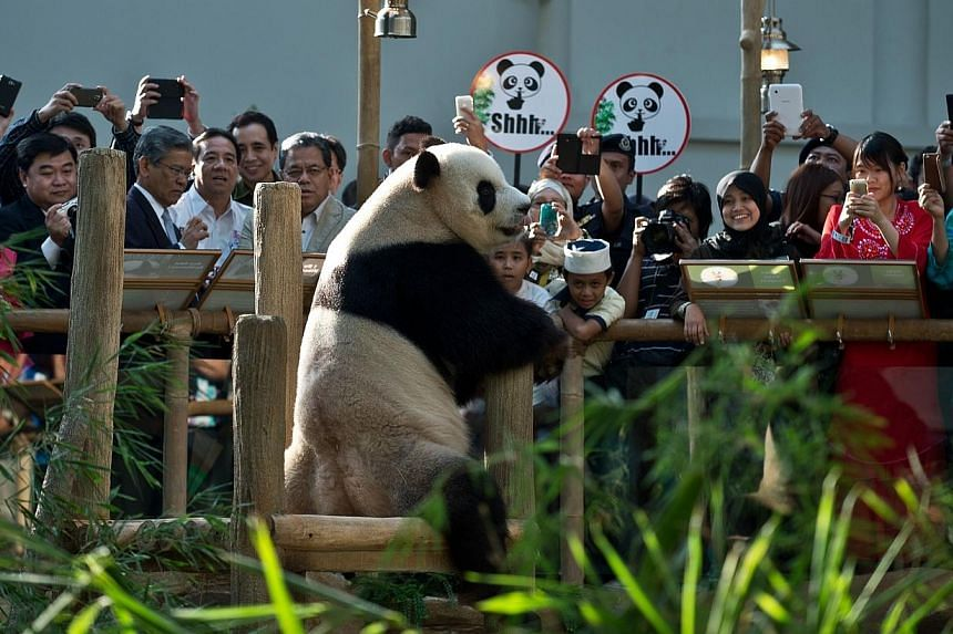 Children and spectators watch Xing Xing (centre), one of two giant pandas on loan from China ,inside the Giant Panda Complex enclosure at the National Zoo in Kuala Lumpur on June 25, 2014. -- PHOTO: AFP