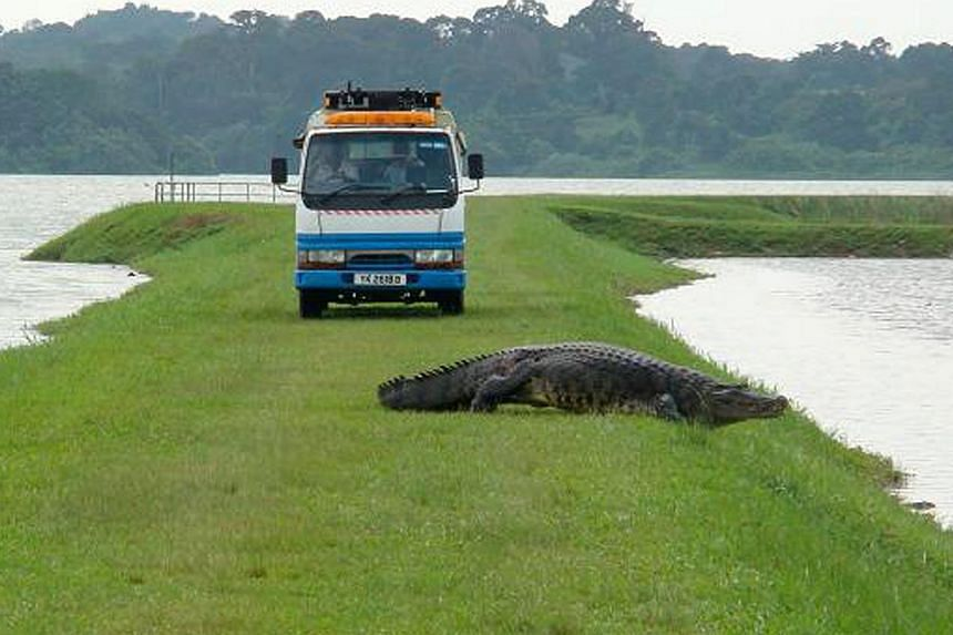 Observers had asked why the carcass of Barney the saltwater crocodile (above), found on April 18, had not been sent for an autopsy. Machinery clearing aquatic plants such as water hyacinths from the surface of Kranji Reservoir (right).