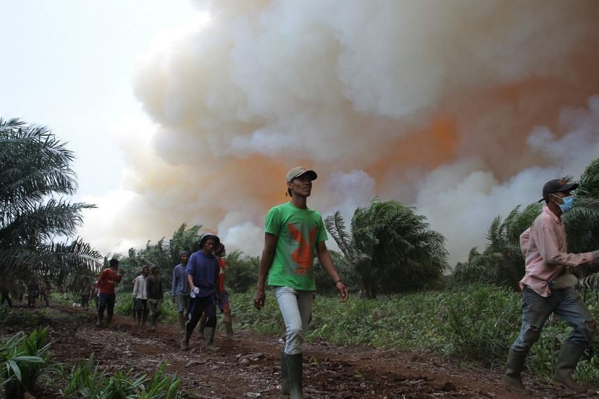 Workers leaving a plantation hit by fire in Dumai, Riau province.Indonesia's disaster agency warned on Wednesday that haze could return to neighbouring Singapore and Malaysia after a huge jump in forest fires in a province at the centre of a sm