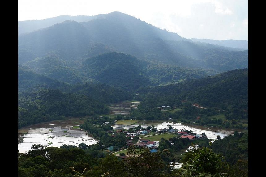 Ba Kelalan's ripe padi fields (left) can be seen from this bird's-eye view (above).
