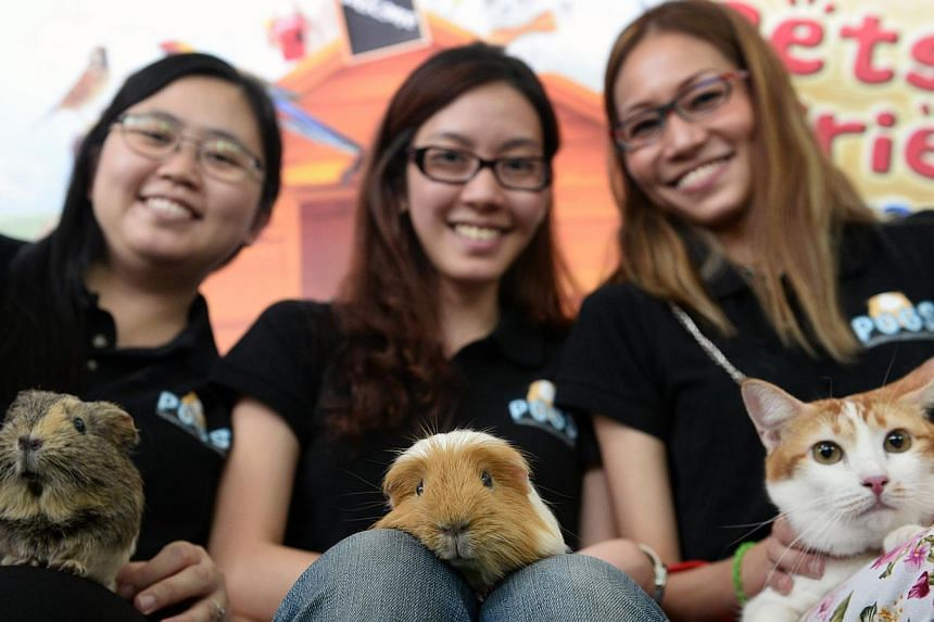 Ms Wendy Lee (from left), 30, founder of a pet social group, account manager Adeline Seet, 29, and physiotherapist Felicia Seet, 34.