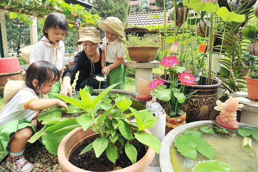 Teacher Wu Liying and her young charges from Ang Mo Kio My First Skool tend the award-winning garden (left) outside their school. Besides ornamental dishes filled with fish, flowering plants (above) also dot the plot.