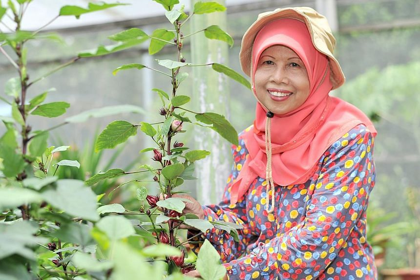 Retiree Salbiah Osman (above) takes three buses from her Tampines home to reach the community garden in Woodlands Street 81, which has eight plots (above) growing plants such as pandan.