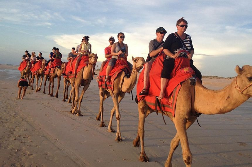 A guided sunset walk along Cable Beach on the backs of camels (above). -- ST PHOTO: J PEARLMAN