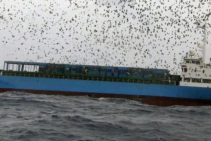 A handout picture released by People for the Ethical Treatment of Animals (PeTA) on May 30, 2014 shows the Taiwanese club representatives releasing pigeons from a ship at sea outside Kaohsiung harbor during a pigeon race on October 13, 2013. Fiv