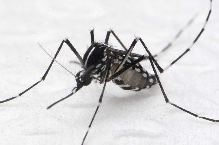 Aedes albopictus mosquito that spreads dengue fever. The number of reported dengue cases in the week that ended on Saturday rose to 898, up by 33 per cent from 674 the week before, said the National Environment Agency (NEA). -- PHOTO: NEA