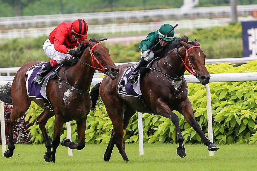 Spalato (right, with jockey Manoel Nunes astride) duelling with Stepitup (with jockey David Flores astride), on his outside before winning the Group 1 Patron's Bowl by a shorthead on 22 June 2014. Pre-race favourite Stepitup drew the widest barrier