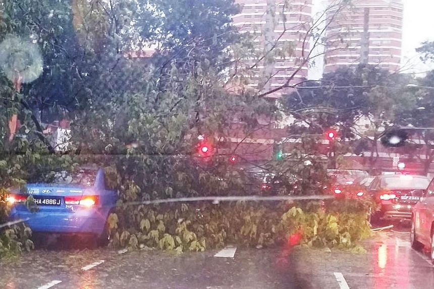 A tree uprooted by strong wind and heavy rain crashed onto a taxi in Bishan Street 22 yesterday morning. The Sumatra squall hit at about 6am and lasted five hours. Flash floods hit Commonwealth Lane and the Kranji Expressway slip road to Woodlands Ro