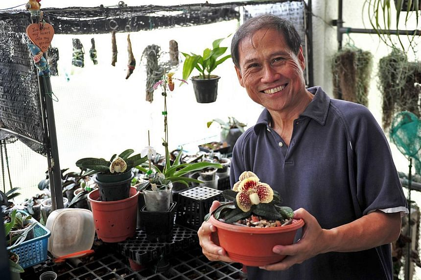 Orchid enthusiast Joseph Yeo (right) has orchids around his house, including shelves of them (right below) outside his front door, with artificial LED lights to help with photosynthesis.