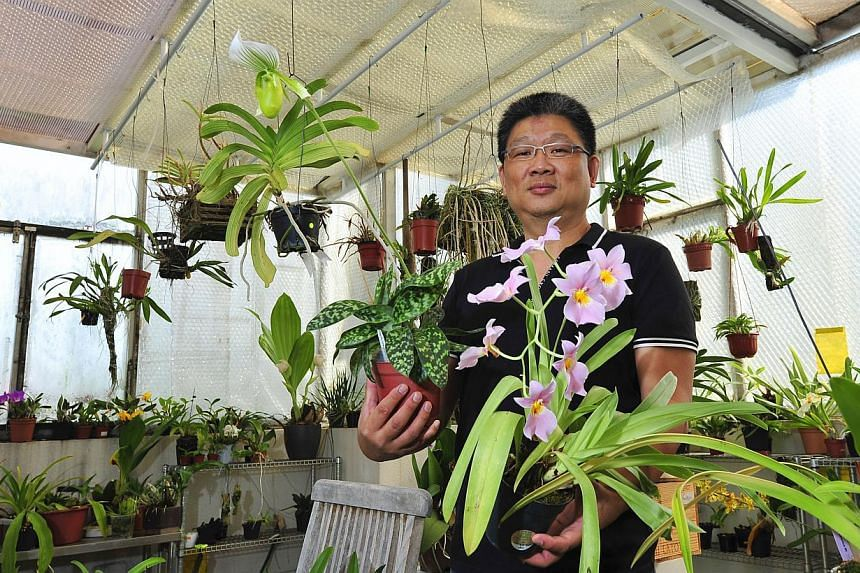 Mr Ng has three air-conditioning units and three fans in his specially constructed cold room (above) to keep the temperature between 24 and 26 deg C during the day. Among the orchids in the collection of Mr David Ng (right) are the Paphiopedilum hybr