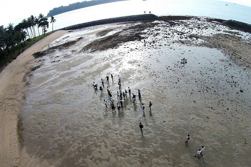 An aerial view of the intertidal areas on Big Sister's Island, part of Singapore's first marine park, at low tide. -- ST PHOTO: JAMIE KOH