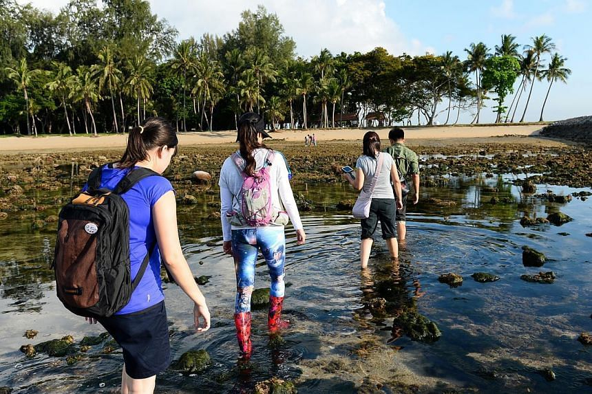Guided walks will be held on Big Sister's Island (Pulau Subar Laut) and other parts of the marine park, at low tide. -- PHOTO: SISTERS' ISLAND MARINE PARK