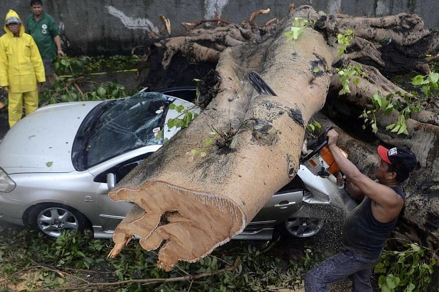 A worker uses an electric saw to remove a huge tree that fell on top of a car during the onslaught of Typhoon Rammasun, (locally named Glenda) that hit Makati city in Manila on July 16, 2014. -- PHOTO: REUTERS
