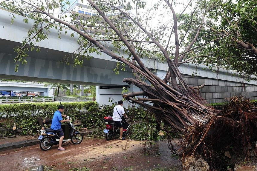 Residents ride their scooters past a fallen tree after Typhoon Rammasun hit Haikou, Hainan province on July 19, 2014. -- PHOTO: REUTERS