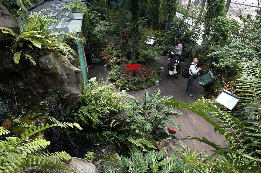 Visitors at the Butterfly Garden in Changi Airport's Terminal 3. -- PHOTO: ST FILE