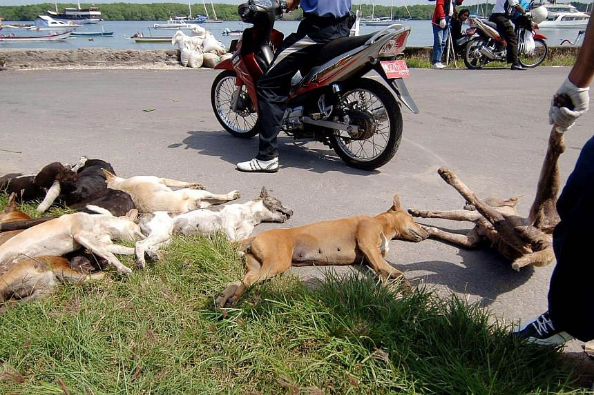 A health department official (right) removes the carcasses of stray dogs culled in a sweep against rabies on Serangan island off the southeast coast of Bali,on February 17, 2009.Among the white sandy beaches, luxury villas and templ
