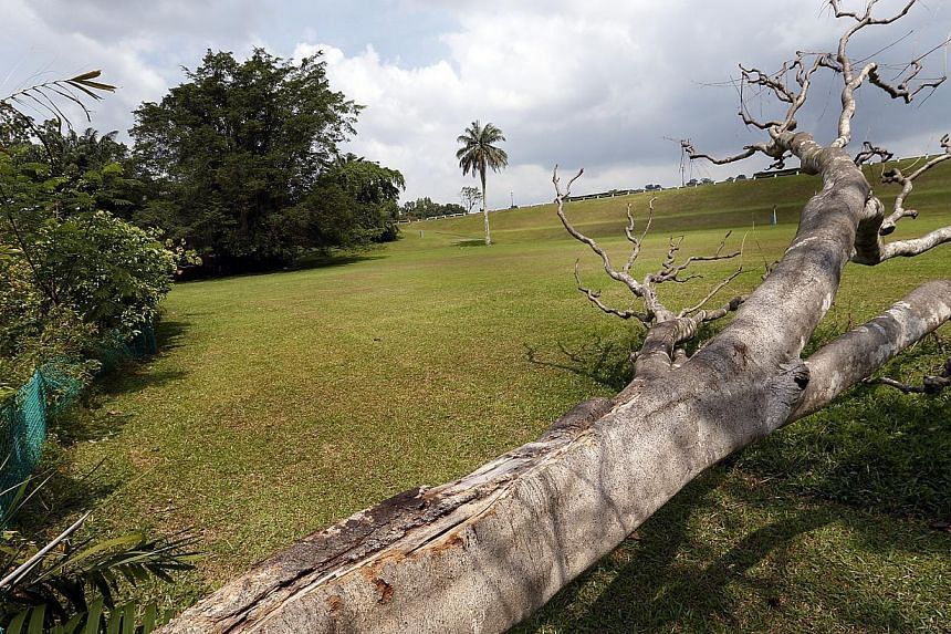 (Above) A field in Lower Peirce showing visible signs of rooting by wild boars in 2012. (Right) When The Straits Times visited the area yesterday morning, there were few signs of damage caused by the animals, although some residents say the remaining