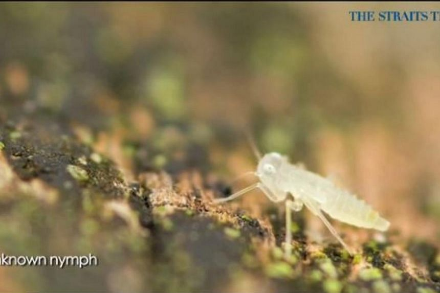 The series kicked off with a trek into the nature reserve with macro photographer Nicky Bay.--PHOTO: SCREENGRAB FROM RAZORTV