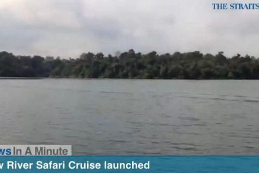 In today's The Straits Times News In A Minute video, we look at how the River Safari has launched a new 15-minute cruise, among other issues. -- PHOTO: SCREENGRAB FROM VIDEO