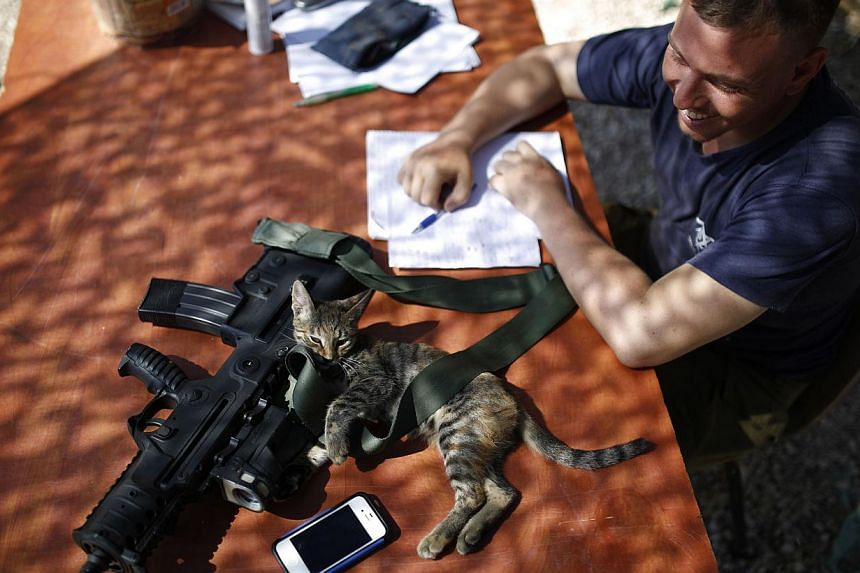 An Israeli soldier looks at a cat lying next to his weapon near the border with the Gaza Strip on August 10, 2014. Israel has accepted a new Gaza ceasefire proposed by Egyptian mediators and will send negotiators to Cairo on Monday if the truce holds