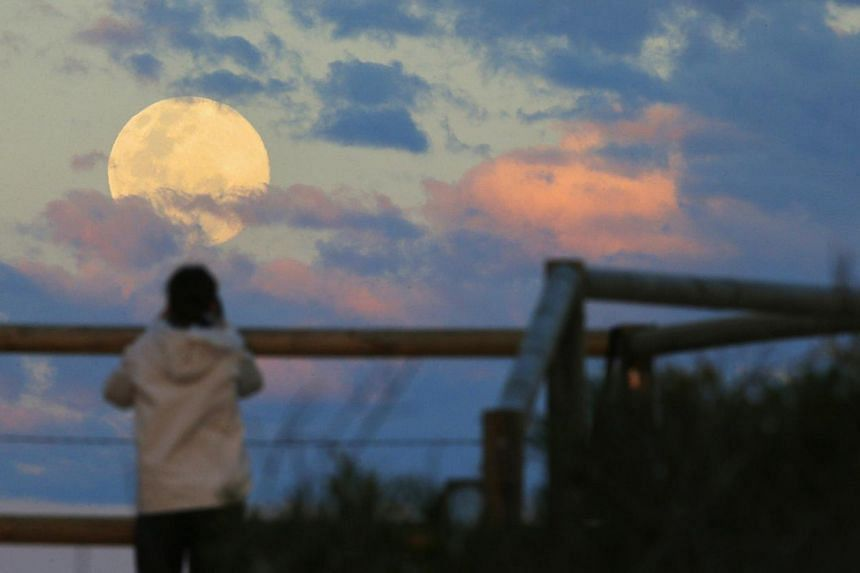 Sydney resident Virginia Maddock watches the supermoon rise off the Sydney beachside suburb of Wanda. -- PHOTO: REUTERS
