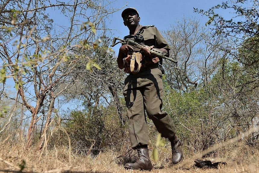 Park ranger Stephen Midzi patrols a section of Kruger National Park, in northern South Africa, scouting for possible poachers on July 31, 2014. South Africa plans to evacuate hundreds of rhinos from the famed Kruger National Park to safe havens out o