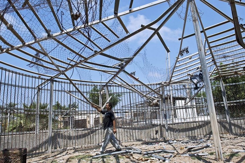 Zookeeper Farid al-Hissi inspects the damage inflicted upon the lion cage by an Israeli military strike at the Bisan City tourist village zoo, in Beit Hanun on Aug 14, 2014. -- PHOTO: AFP