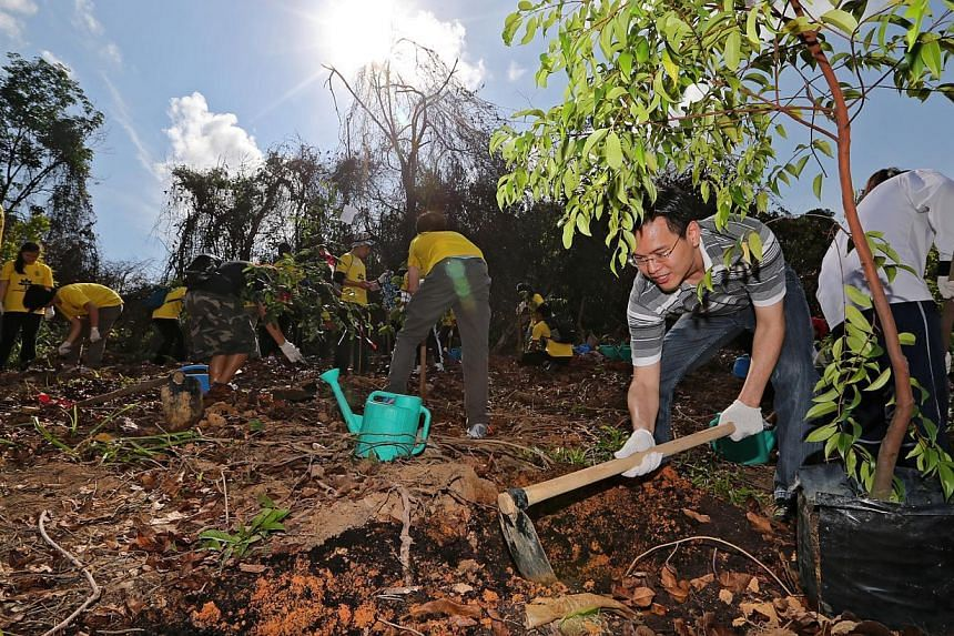 Minister of State for National Development Desmond Lee doing his part at the reforestation initiative on Pulau Ubin yesterday. He says that one solution to tackle the island's fast-eroding northern coastline could be to install breakwaters.