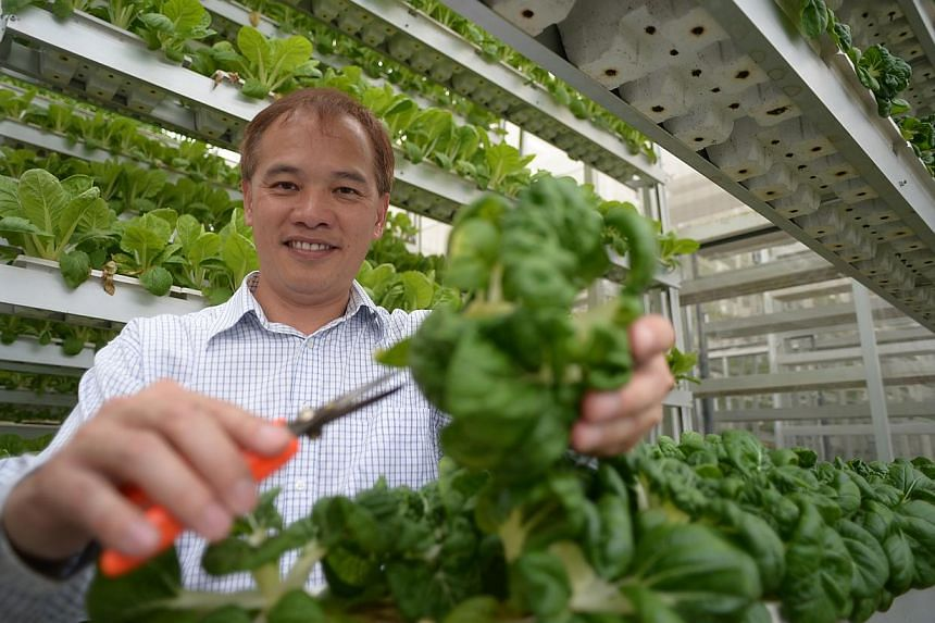 Mr Jack Ng, 51, chief executive of urban farm Sky Greens, with trays of vegetables that are grown stacked inside A-shaped frames. Local farmers applying for new leases and extensions must now meet minimum production levels and land use conditions.