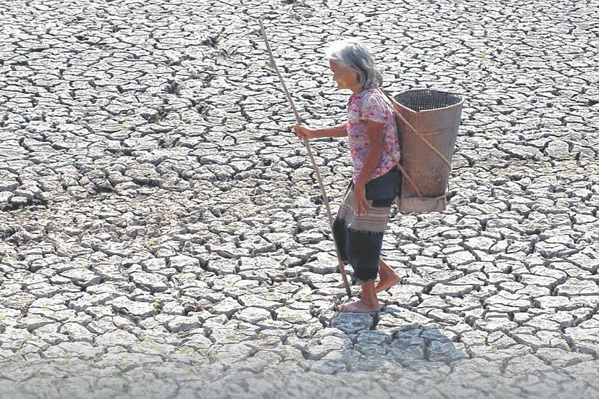 Saline water renders farmlands in Vietnam very dry and useless. Salt concentrations in the groundwater have been measured up to 3:1,000, far higher than Health Ministry guidelines which stipulate that salt concentration levels must be less than 0.3 p