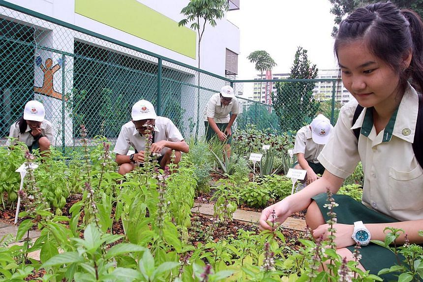 Shuqun Secondary School students helping out in a community garden located beside the school. Forty-two secondary schools will soon offer a programme for students to deepen their knowledge and skills in science, mathematics and technology. -- PH