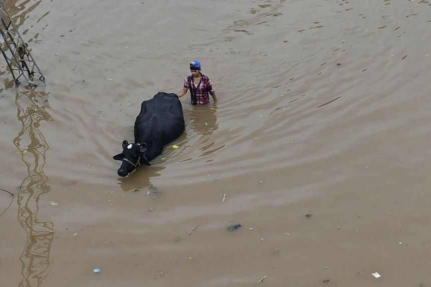 A Pakistani man guides his buffalo through floodwaters following heavy rain in Lahore on Sept 4, 2014.At least 25 people have been killed in roof collapses caused by heavy monsoon rains in Pakistan, officials said Thursday, as authorities warne