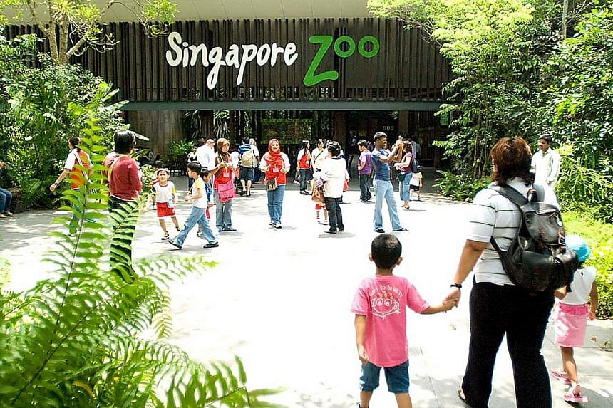 "The Government is looking at making Mandai zoo ""bigger and better"", said Prime Minister Lee Hsien Loong on Thursday evening. -- PHOTO: SINGAPORE ZOO"