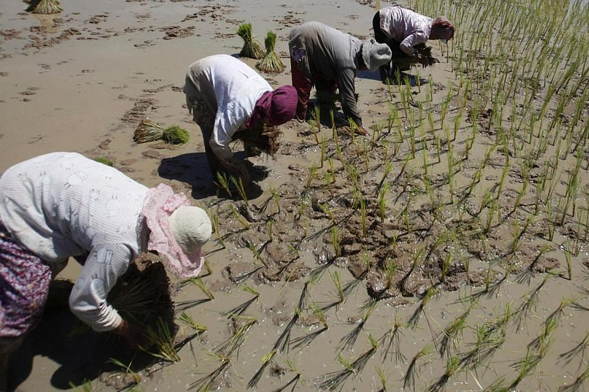 People planting rice in a paddy field outside Phnom Penh. Agriculture accounts for just 40 per cent of total employment in the region but, country-wise, it remains the largest employer for Cambodia, Laos, Myanmar, Thailand and Vietnam.