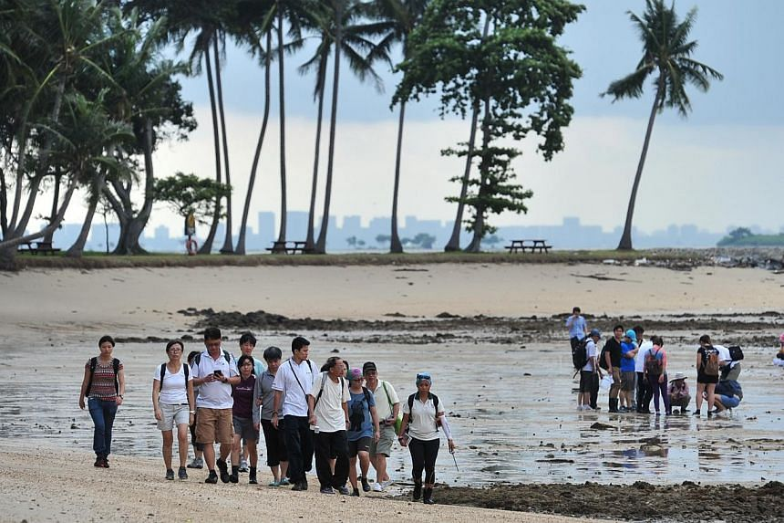 Participants on National Parks Board's guided walks at Sisters' Islands Marine Park touring the sea shore at low tide. -- ST PHOTO: STEFFI KOH