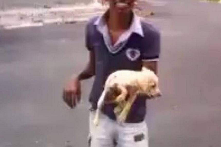 A screenshot of the video that was posted on the Facebook page of a Malaysian portal, showing a boy abusing a dog. -- PHOTO: SCREENSHOT FACEBOOK