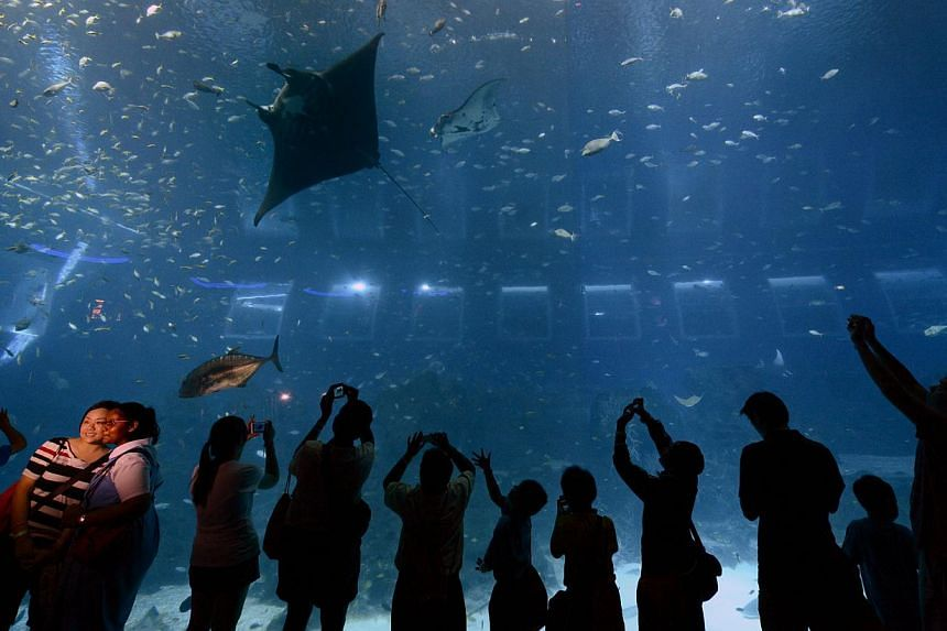 Visitors wowed by a manta ray at Resorts World Sentosa. Two newly-acquired rays at its Marine Life Park died while in quarantine this year.