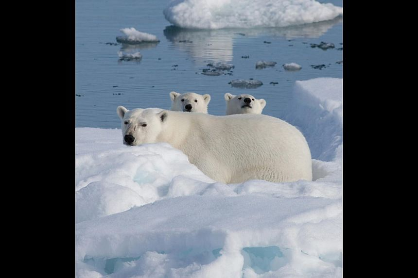 Imax 3D Documentaries (To The Arctic). -- PHOTO: SHAW ORGANISATION