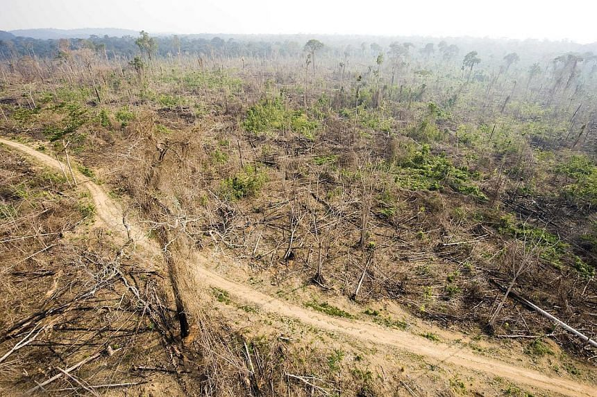 This aerial picture taken on Nov 29, 2009 shows a sector of the Amazon forest, in the state of Para, in northern Brazil, illegally deforested. -- PHOTO: AFP