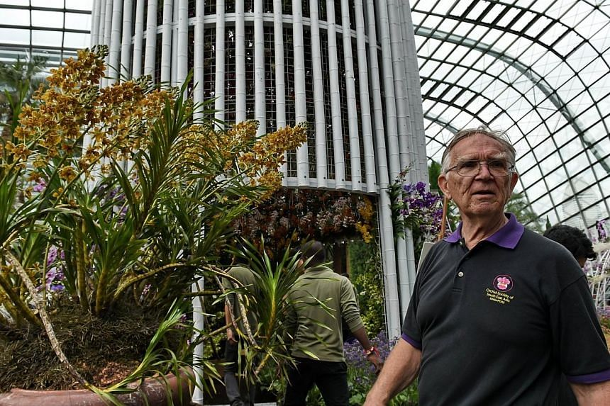 John Elliot, a member of the Orchid Society of South East Asia, looks on in front of his example of the world's largest species of orchid, the Tiger Orchid (Grammatophyllum Speciosum). -- PHOTO: AFP