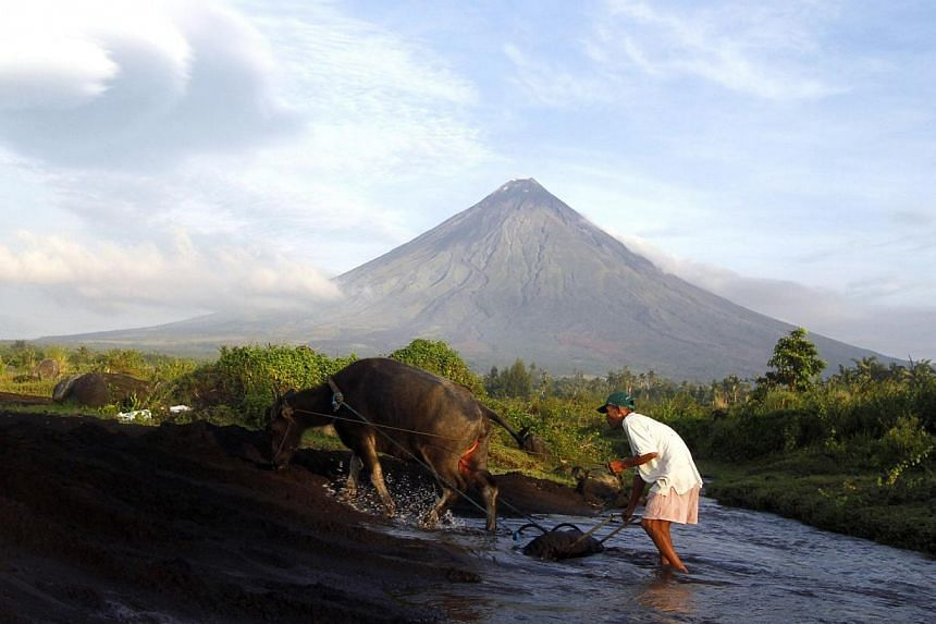 A farmer walks with his buffalo with the Mayon Volcano in the background in Albay province, Bicol region, south of Manila on Sept 17, 2014.After evacuating about 55,000 people, Philippine authorities said on Sunday, Oct 5, that they were labour