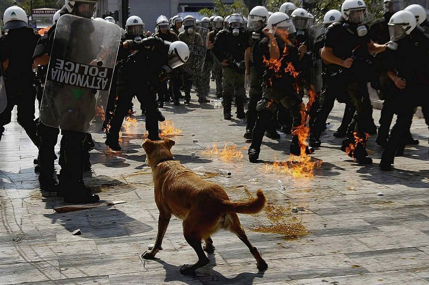 Sausage, a stray dog, is pictured in front of a group of riot police officers struggling to avoid a petrol bomb thrown by protesters during a demonstration in Athens on Oct 5, 2011. Sausage, the ginger mongrel who became famous for appearing at