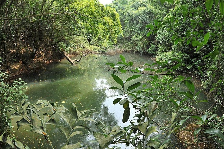 An NHB documentary on the century-old Keppel Hill Reservoir got almost 60,000 views since its launch on Sept 16. Rev Isaac Raju of Pasir Panjang Tamil Methodist Church said worshippers liven up the area on weekends. The other churches there are Grace