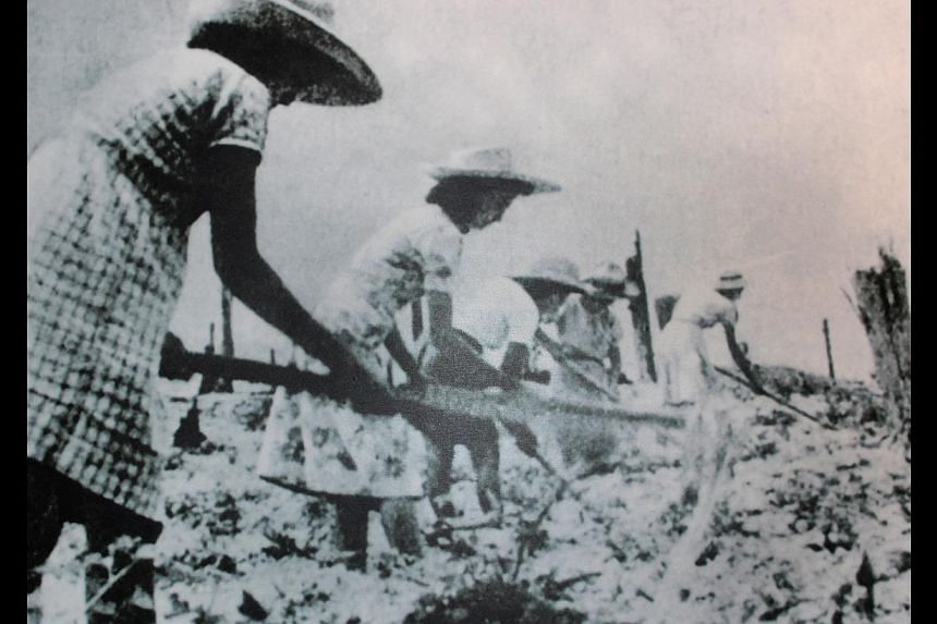 Settlers trying to grow crops in the Bahau settlement (above) during the Japanese Occupation. They soon found that the soil was so bad, it could not sustain farming. -- PHOTO: EURASIAN ASSOCIATION SINGAPORE
