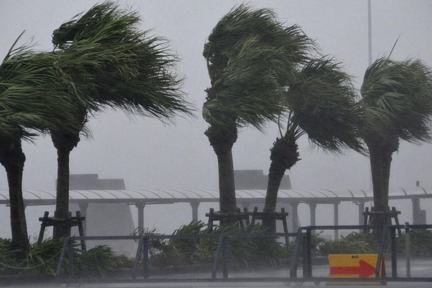 Roadside trees are blown by strong winds in Miyazaki, Japan's southern island of Kyushu on Oct 12, 2014.Five flights to and from Singapore and Japan will be delayed today and tomorrow as a result of Tropical Storm Vongfong. -- PHOTO: AFP