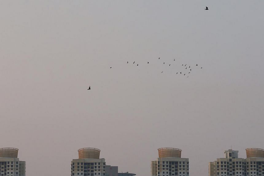 A flock of pigeons fly across the hazy gray skies at 7.10am on Oct 14, 2014. -- ST PHOTO: NEO XIAOBIN