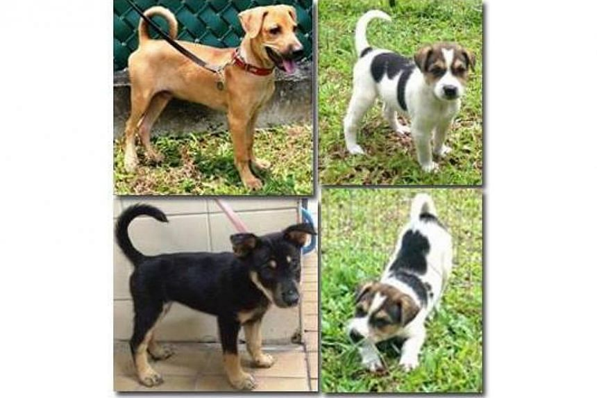 Animal welfare group Save Our Street Dogs (SOSD) has put out a plea on Facebook requesting for people to foster three puppies. -- PHOTO: FACEBOOK/SAVE OUR STREET DOGS