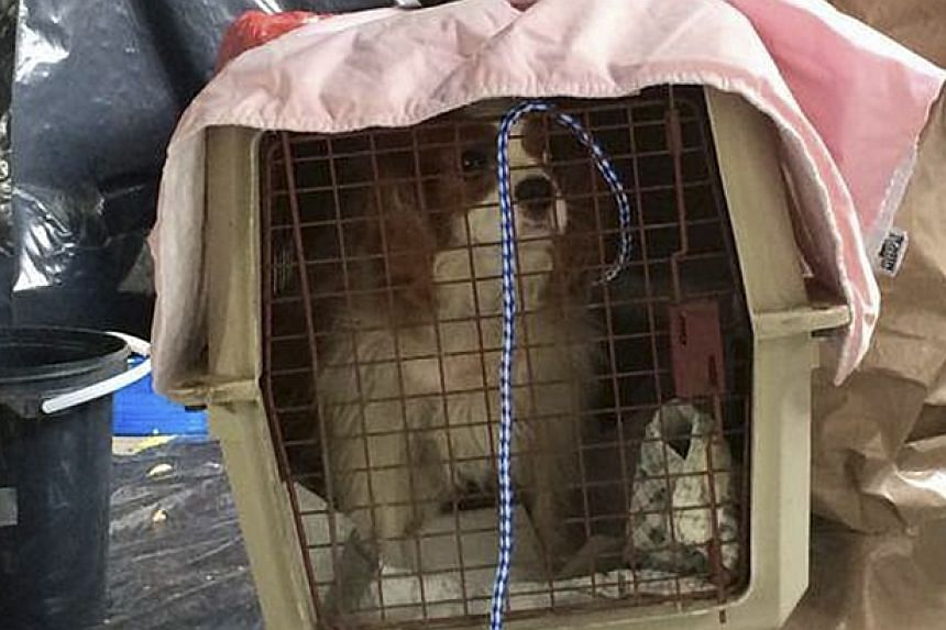 Dallas Animal Services and Adoption Center photo shows Bentley the dog being transported in Dallas. -- PHOTO: REUTERS