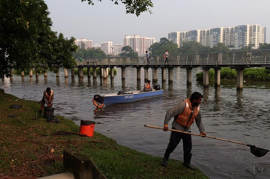 Workers cleaning up Jurong Lake Park on Oct 19, 2014. -- ST PHOTO: NEO XIAOBIN