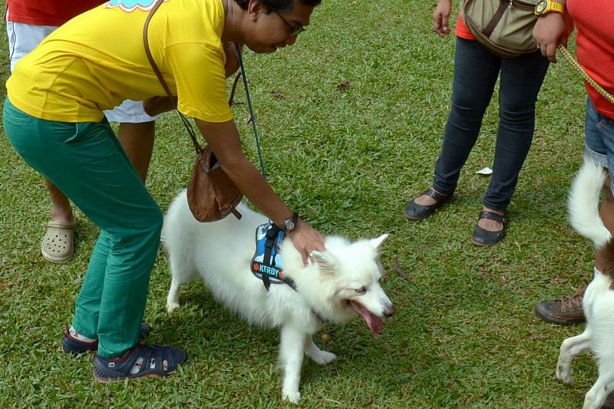 Clarification Of I Want To Touch A Dog Campaign Issue Anissyafiqahhh